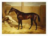 Mr. F.I. Popham's Brown Colt, 'Wild Dayrell' in a Loose Box Giclee Print by Thomas Barratt of Stockbridge