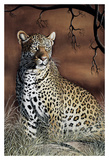Sitting Leopard Prints by Rajendra Singh