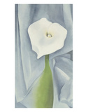 Calla Lily on Grey, c.1928 Prints by Georgia O'Keeffe