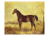 The Racehorse 'Tranby' in a River Landscape Giclee Print by Edward Troye