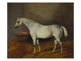 Box Keeper&#39;, a Flea-Bitten Grey in a Stable Giclee Print by Sr. (Circle of), John Frederick Herring