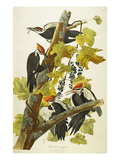 Pileated Woodpecker (Dryocopus Pileatus), Plate Cxi, from 'The Birds of America' Prints by John James Audubon