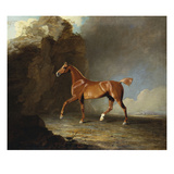 A Golden Chestnut Racehorse by a Rock Formation with a Town Beyond Art