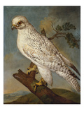 A Falcon on a Branch Giclee Print by Ferdinand Phillip de Hamilton