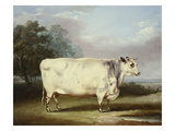 A Prize Cow Reproduction proc&#233;d&#233; gicl&#233;e par William Henry Davis