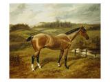 A Strawberry Roan Hunter in a Landscape Prints by B. Cam Norton