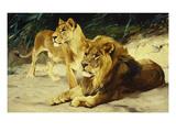 Lion and Lioness-Lowenparr Kunst von Wilhelm Kuhnert