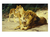 Lion and Lioness-Lowenparr Art by Wilhelm Kuhnert