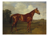 Prince Hatzfeldt's Chestnut Gelding 'Ascetic's Silver' in a Paddock Prints  by  Emil Adam