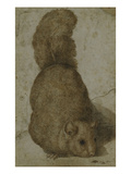 A Squirrel Poster by Giovanni da Udine (Attr to)