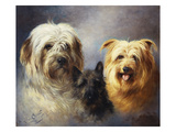 A Tibetan, a Cairn and a Silky Terrier Giclee Print by Lilian Cheviot