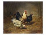Poultry Feeding Giclee Print by Arthur Fitzwilliam Tait