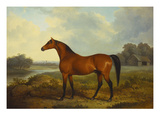 A Bay Stallion in a River Landscape Art by James Barenger
