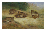 Partridges Basking Giclee Print by Archibald Thorburn