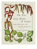 The Trees of Great Britain and Ireland, Volume 1 Giclee Print by Henry John and Augustine Elwes and Henry