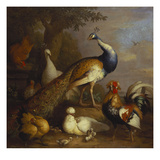 A Peacock, a Peahen and Poultry in a Landscape Reproduction proc&#233;d&#233; gicl&#233;e par Tobias Stranover
