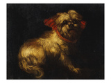 Maltese Terrier with a Red Collar Giclee Print by  School of Madrid