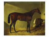 The Race Horse &#39;Merry Monarch&#39; in a Stall Giclee Print by John Frederick Herring I
