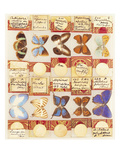 A Collection of Entomological Microscope Slides, Contained in Three Fitted Mahogany Cases, the… Giclee Print
