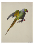 A Ring-Necked Parakeet Posters by Carl Franz Gruber
