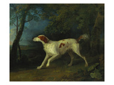 A Brown and White Setter in a Wooded Landscape Giclee Print by Sawrey Gilpin