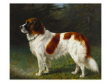 A St. Bernard on the Edge of a Wood Giclee Print by Heinrich Sperling