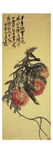 Three Peaches Reproduction procédé giclée par Wu Changshuo