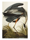Great Blue Heron (Ardea Herodias), Plate Ccxi, from 'The Birds of America' Prints by John James Audubon