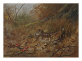 A Woodcock Nesting in Autumn Leaves Posters by Archibald Thorburn