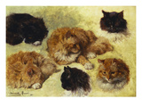 Studies of Cats Prints by Henriette Ronner-Knip