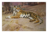 The Tiger Prints by John Charles Dollman