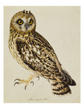 A Short-Eared Owl Giclee Print by Christopher Atkinson