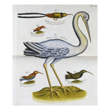 Heron and Humming Birds, from 'A Voyage to the Islands of Madera, Barbados, Giclee Print by Sir Hans Sloane