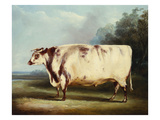 A Prize Bull Reproduction proc&#233;d&#233; gicl&#233;e par William Henry Davis