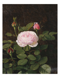 A Maria Larpin Rose Giclee Print by Otto Didrik Ottesen