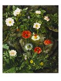 Wild Roses, Poppies and Daisies by a Rocky Bank Giclee Print by Augusta Laessoe