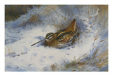 A Snipe in the Snow Premium Giclee Print by Archibald Thorburn