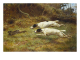 Terriers on a Hare Impression giclée par Thomas Blinks