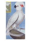 A Cockatoo. from 'Histoire Des Oiseaux, Peints Dans Tous Leurs Aspects' Posters par Francois Nicolas Martinet