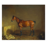 A Portrait of 'Marshall' a Bay Racehorse, in a Stall Giclee Print by Edward Troye