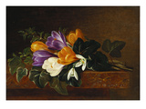 Crocii and Snowdrops on a Marble Ledge Giclee Print by Johan Laurentz Jensen