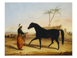 A Dark Bay Arab Stallion and Groom by an Encampment Posters by George Henry Laporte