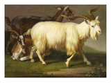 Billy Goats Giclee Print by Johan Wenzel Peter