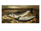 Salmon on a River Bank Giclee Print by John Russell