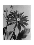 House & Garden - June 1938 Photographic Print by J. Horace McFarland