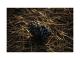 Famous Pinehurst Pinecones Regular Photographic Print by Dom Furore