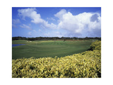 Sandy Lane Country Club Green Monkey, Hole 4 Regular Photographic Print by J.D. Cuban