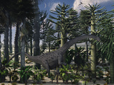 A Young Diplodocus Dinosaur Feeding in a Prehistoric Forest Photographic Print by  Stocktrek Images