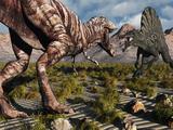 A Confrontation Between a T. Rex and a Spinosaurus Dinosaur Fotografisk tryk af Stocktrek Images,