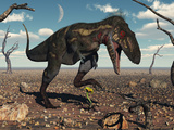 A Nanotyrannus Crushes the Last Flower in a Prehistoric Landscape Photographic Print by  Stocktrek Images
